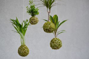 Hanging plants-how-to-make-a-kokedama-hanging-garden
