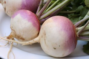 Turnips-planting-growing-and-harvesting-turnips