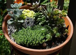 Succulents in pot-how-to-water-succulent-plants