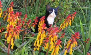 A Cat in the garden-plants-that-are-poisonous-to-cats