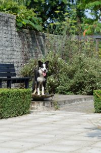 Dog in the garden-plants-that-are-poisonous-for-dog