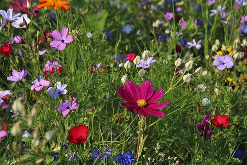 Wildflowers-monthly-garden-list