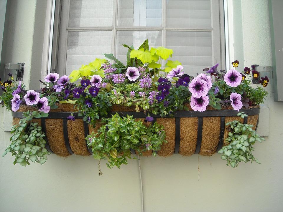 Window Box-window-box-planting-ideas