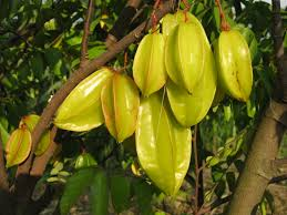 Carambola-Carambola health benefits