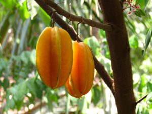 Carambola fruit-Carambola-Carambola health benefits