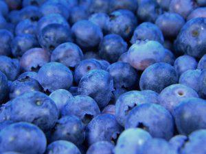 Blueberries-Growing blueberries in pots
