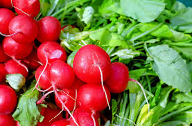 Radishes-how-to-grow-vegetables-on-a-hillside