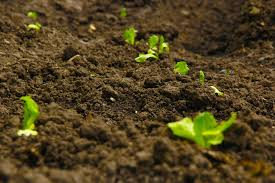 Plants growing in soil-feeding soil microbes