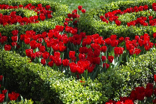 Red flowers-garden-tools-for-the-begginers