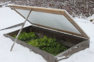 Cold frame garden in the snow-cold frame garden