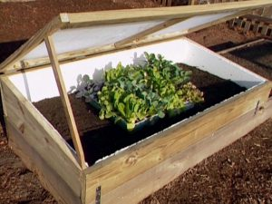 Cold frame garden propped up-cold frame garden