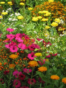 Garden flowers-homemade-remedies-for-garden-pests