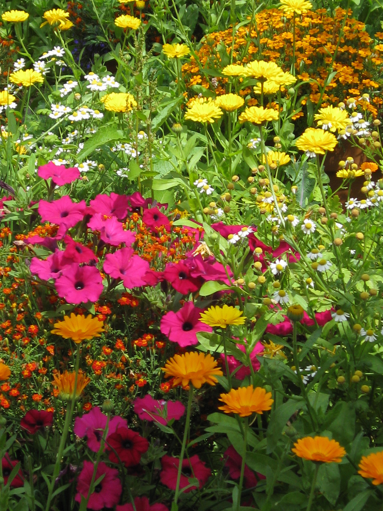 Garden flowers-plants-that-cause-allergies