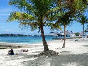 Nassau beach- how to plant a coconut tree