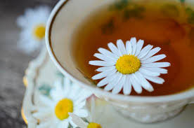 Cup of chamomile tea-growing chamomile tea