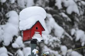 Bird house in the snow-how-to-care-for-bird-house-in-the-snow