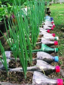 Herbs growing in plastic bottles-how-to-make-a-plastic-bottle-garden