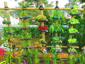 Plants-planted-plastic-bottle-plastic bottle garden