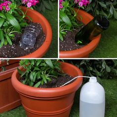 Watering plants-how-to-make-a-plastic-bottle-garden