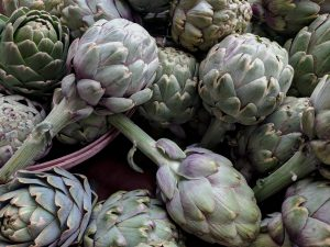 Artichokes-how-to-grow-artichokes