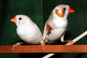 Finches-how-to-care-for-birds-in-the-winter