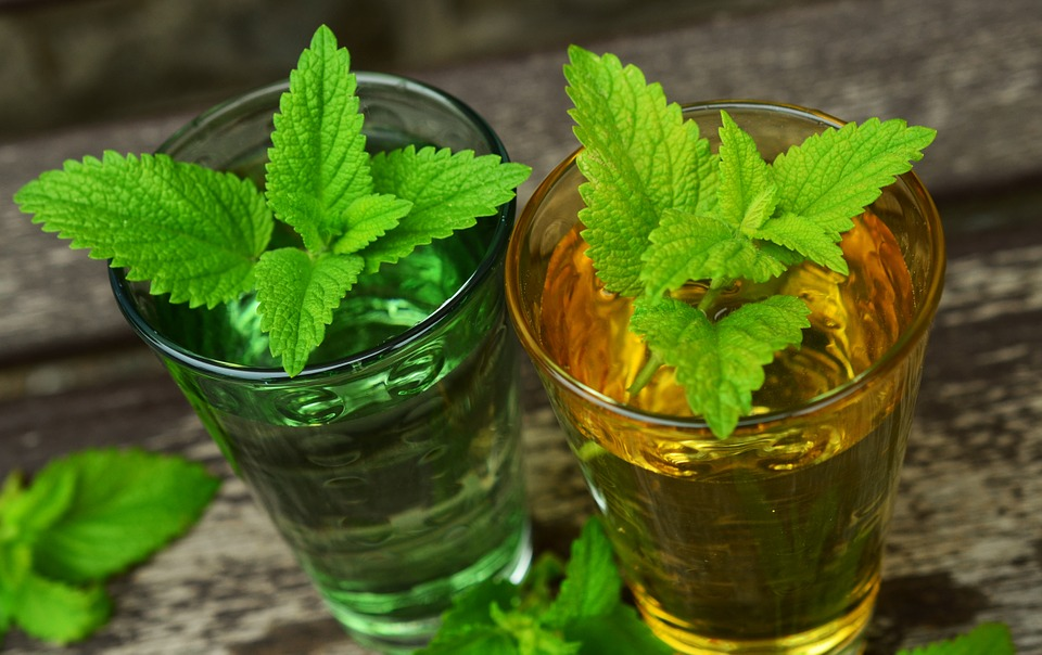 Lemon balm-lemon-balm-tea-benefits