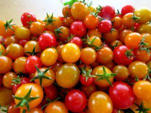 Tomato Plant Sucker-tomatoes