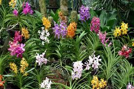 Garden Plants-how-install-a-tropical-garden