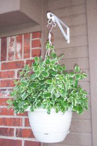 Hanging Basket-apartment-gardening