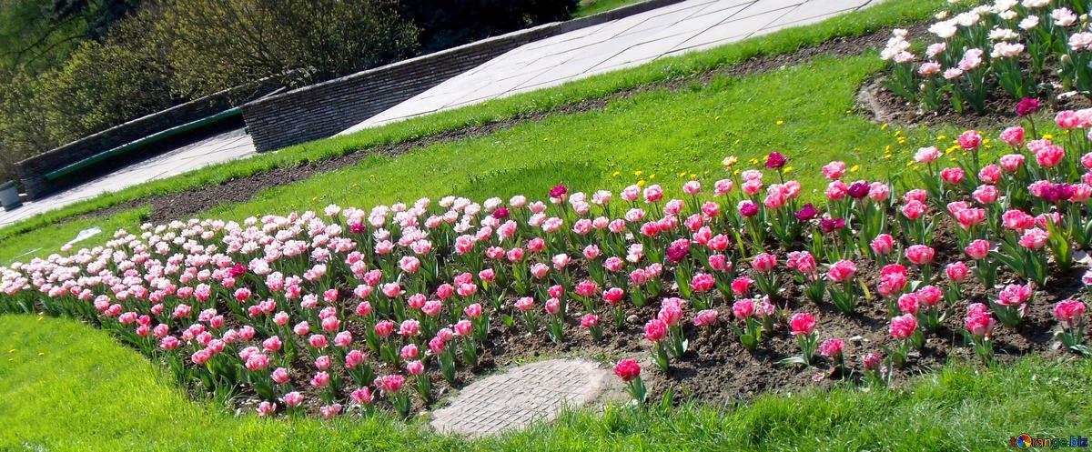A hillside garden-slopes-and-hillside-gardens
