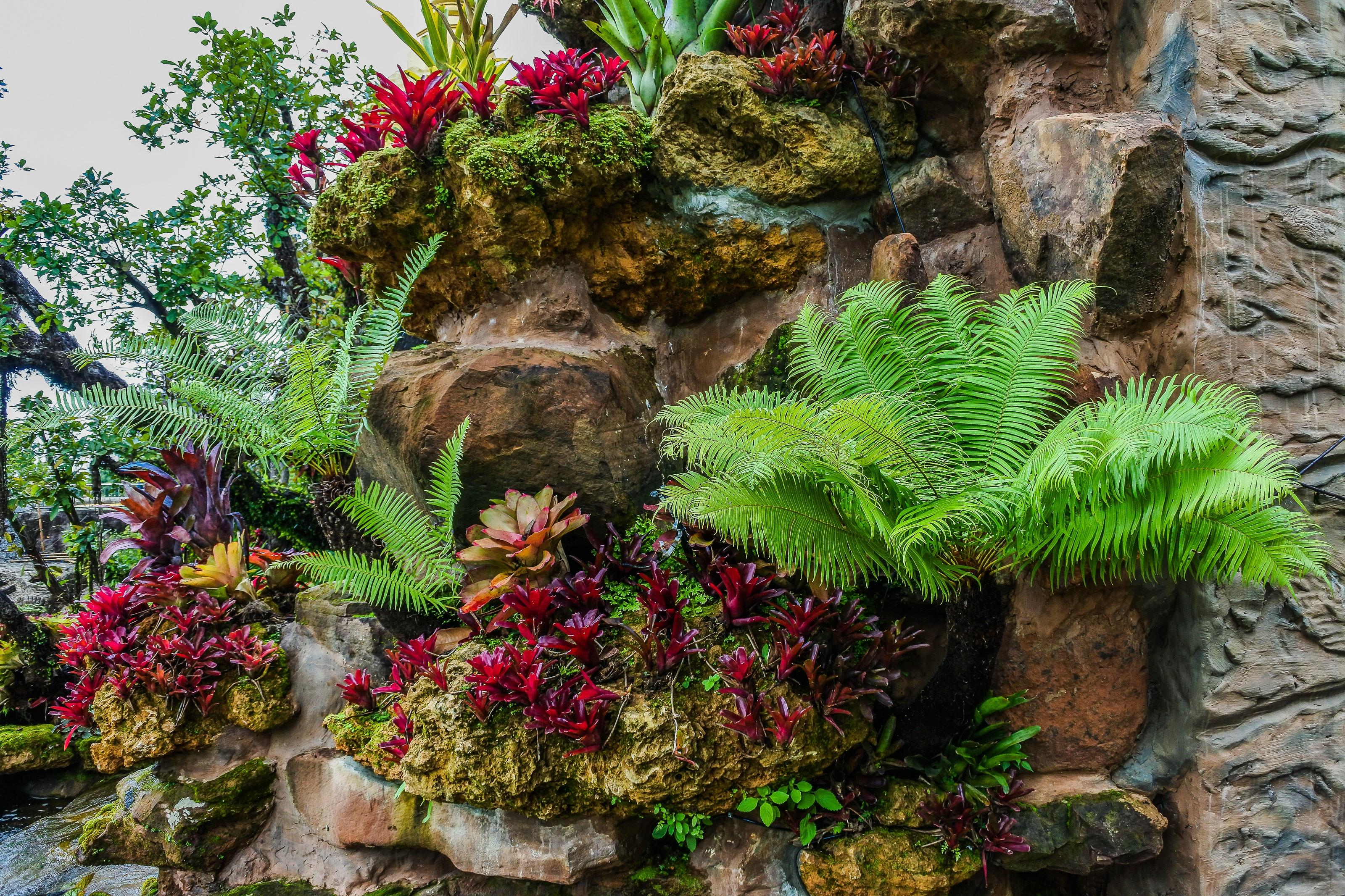 A Rock Garden-how-to-build-a-rock-garden