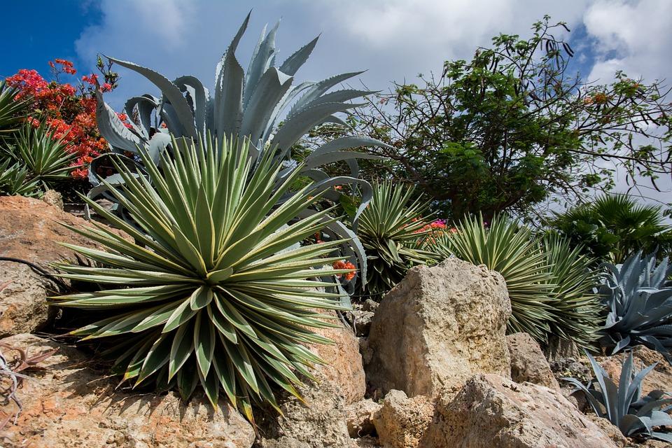 A Rock Garden- a-rock-garden