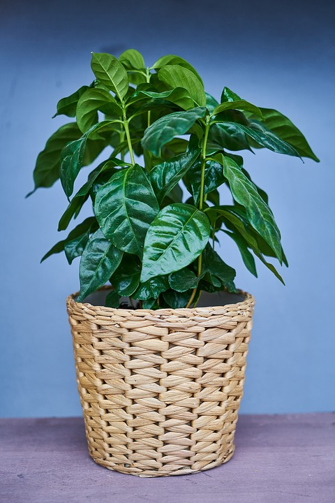 And indoor plant-how-to-harden-off house-plants