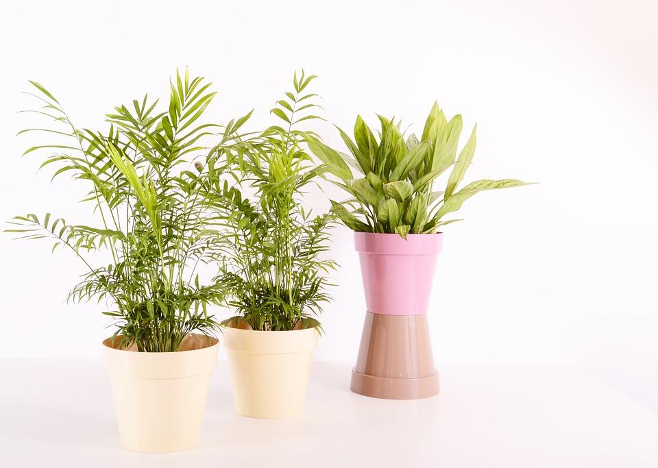 Indoor Plants-how-to-harden-off-houseplants