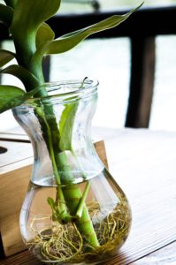 A plant growing in a bottle-indoor-water-gardens