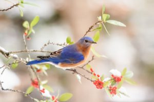 A BlueBird-june-gardening-tips