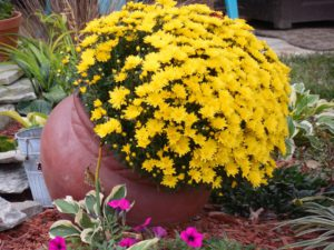 Side Yard garden Ideas-clay-pot-with-flower