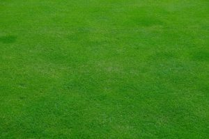 Top Dressing Lawn-a-well-maintain-lawn