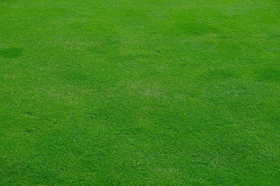 Garden Lawn-organic-lawn-tips