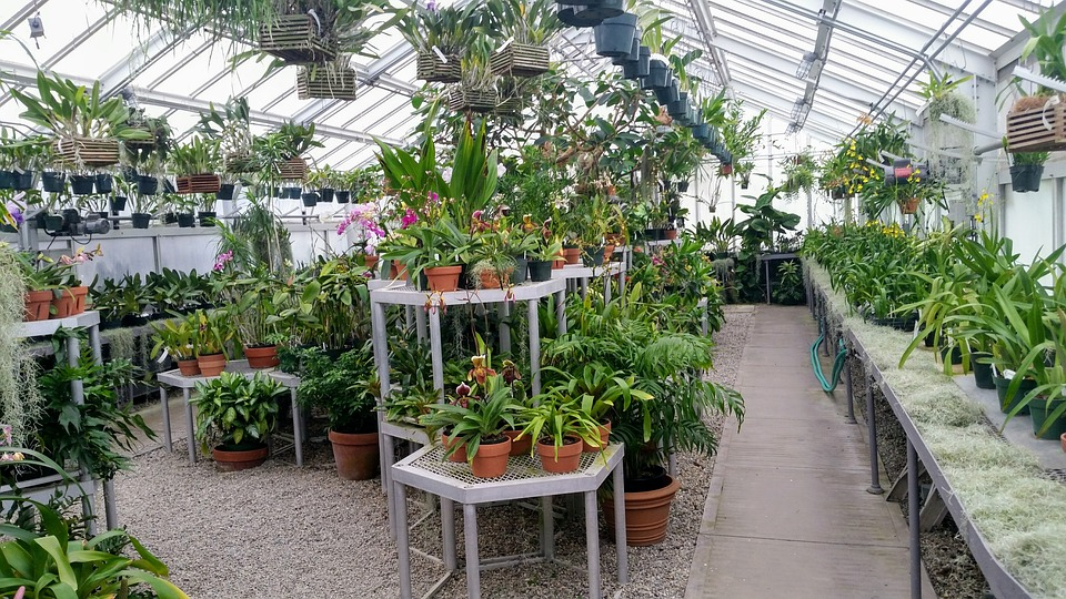 Green House-green-house-gardening