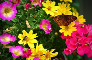 How To Make A Sustainable Garden-a-butterfly-on-garden-flowers