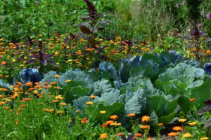 Vegetable And Herbs-june-gardening tips