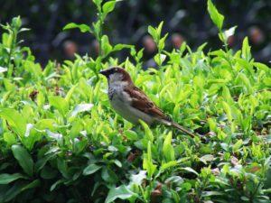 A bird resting-gardening-for-butterflies-birds-and-bees