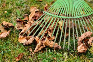 Raking leaves of grass-how-to-take-care-of-grass-in-the-fall