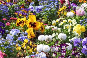 Spring Flowers-campanion-with-flowers