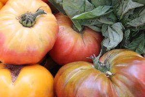 Tomato Plant Sucker-heirloom-tomatoes