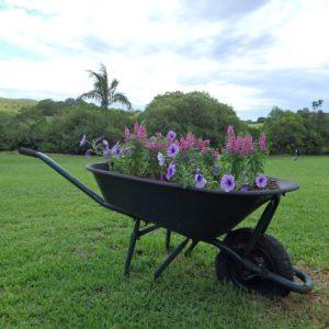 Wheel Barrow-garden-ideas-recycled-plant