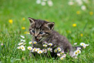 Best Pet Friendly Fertilizer-kitten-in-the-garden