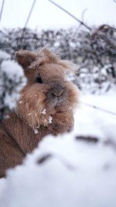 Winter Wildlife Garden-a rabbit-in-the-snow