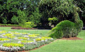 Topiary Garden-a-peacock